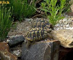 einige schildkröten in bildern
